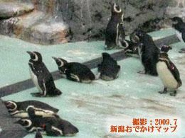 大量のペンギン