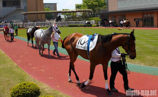 パドック中の馬