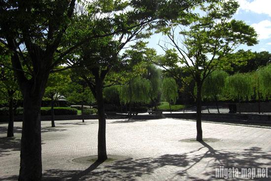 西大幡公園の樹木
