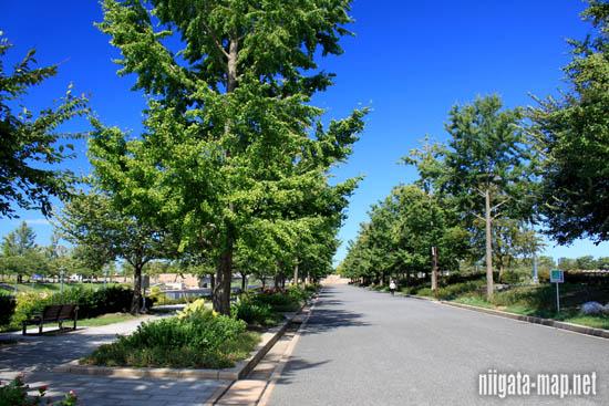 スポーツ公園遊歩道