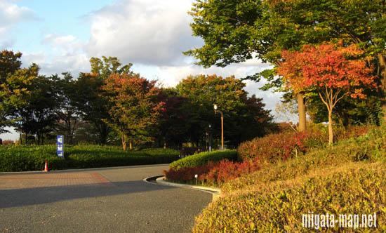 スポーツ公園の紅葉
