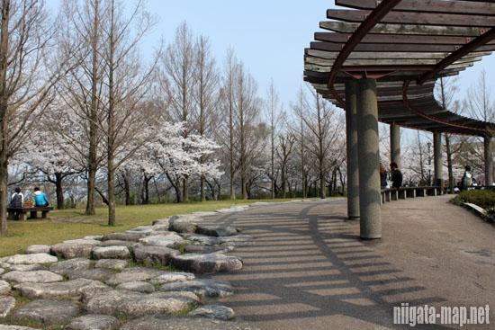 出合いの丘と桜