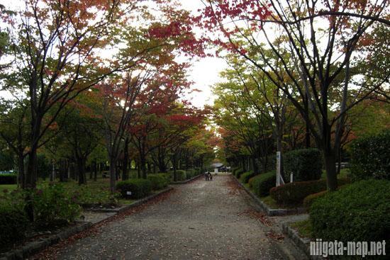紅葉時期の遊歩道