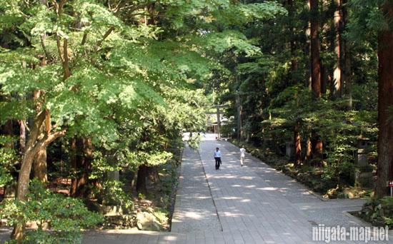 弥彦神社歩道