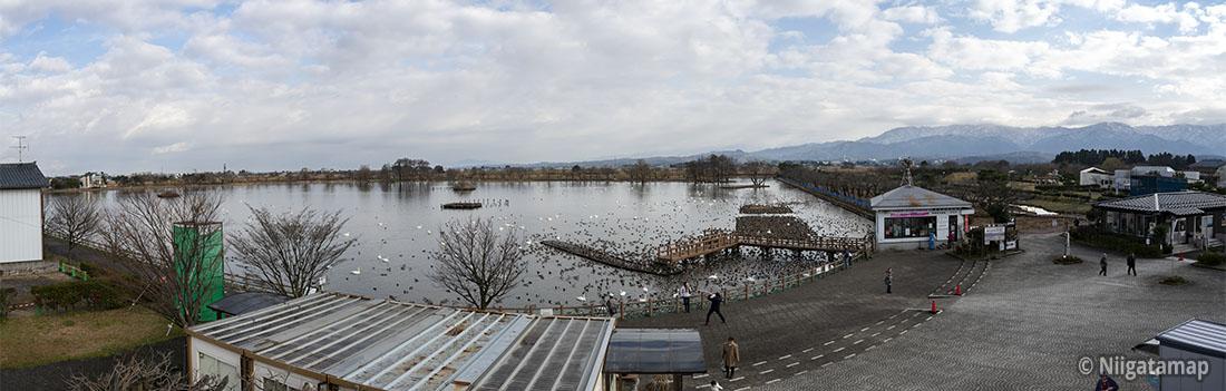 歩道橋からの瓢湖全体の景色