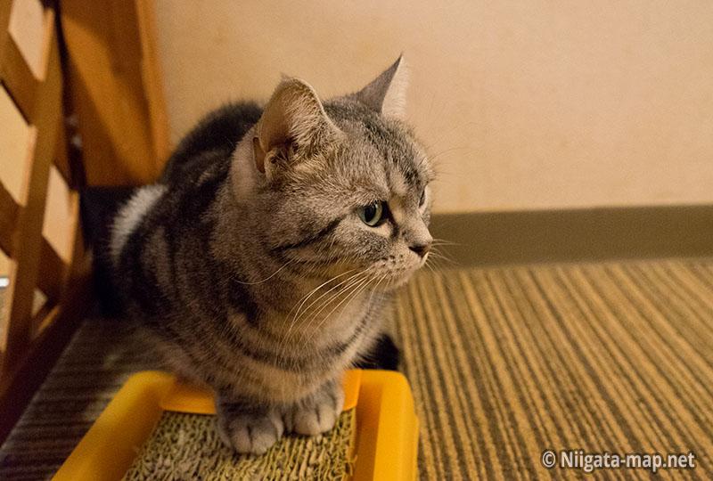 猫カフェアミパ