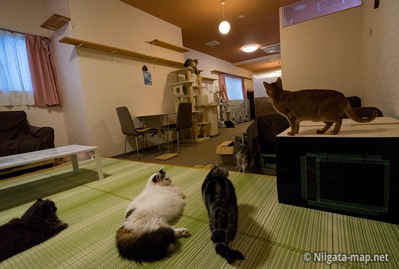 アミパ新潟室内