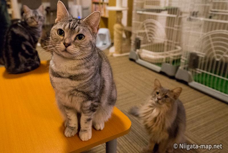 猫カフェアミパ新潟店