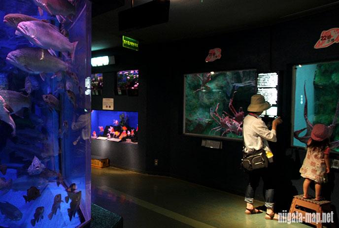 寺泊水族博物館(てらどまりすいぞくはくぶつかん)