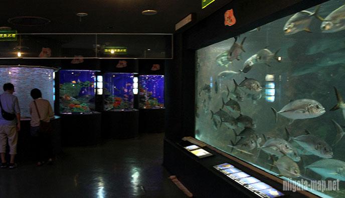 大回遊水槽と熱帯魚