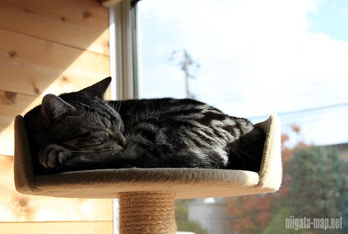 猫カフェちぐら