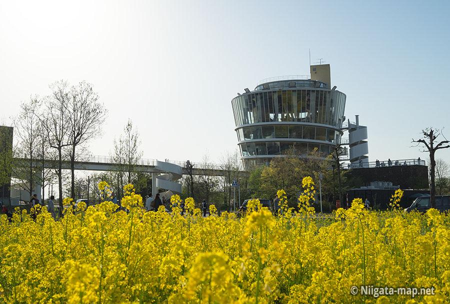 菜の花とビュー福島潟