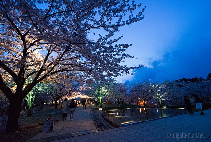 空中庭園の桜
