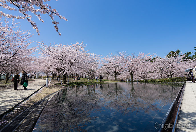 水に映る桜の木