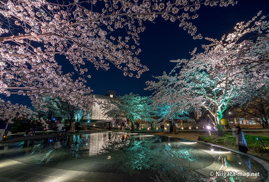 空中庭園の夜桜