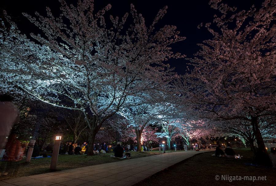 夜桜と花見