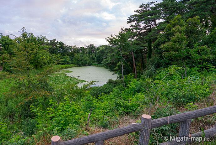じゅんさい池(西池)