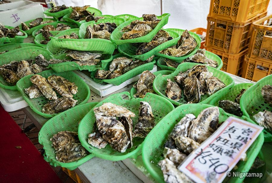 宮城県産真牡蠣