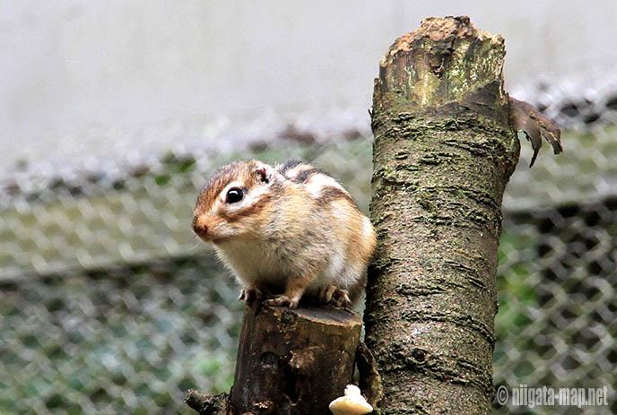 加茂山公園のリス