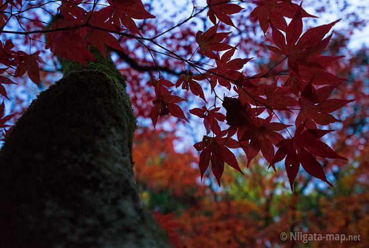 加茂山公園の紅葉アップ