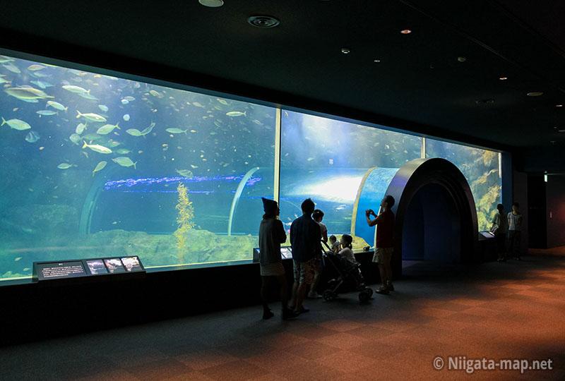 日本海大水槽