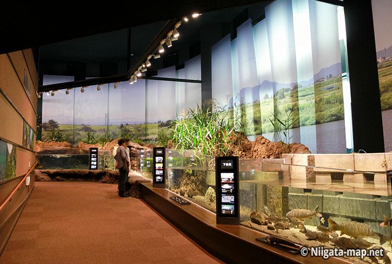 信濃川の生物展示