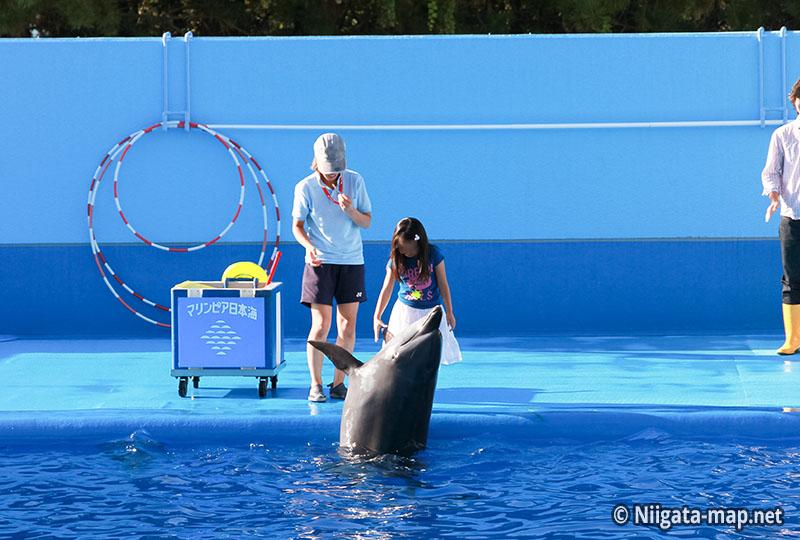 イルカとの触れ合い
