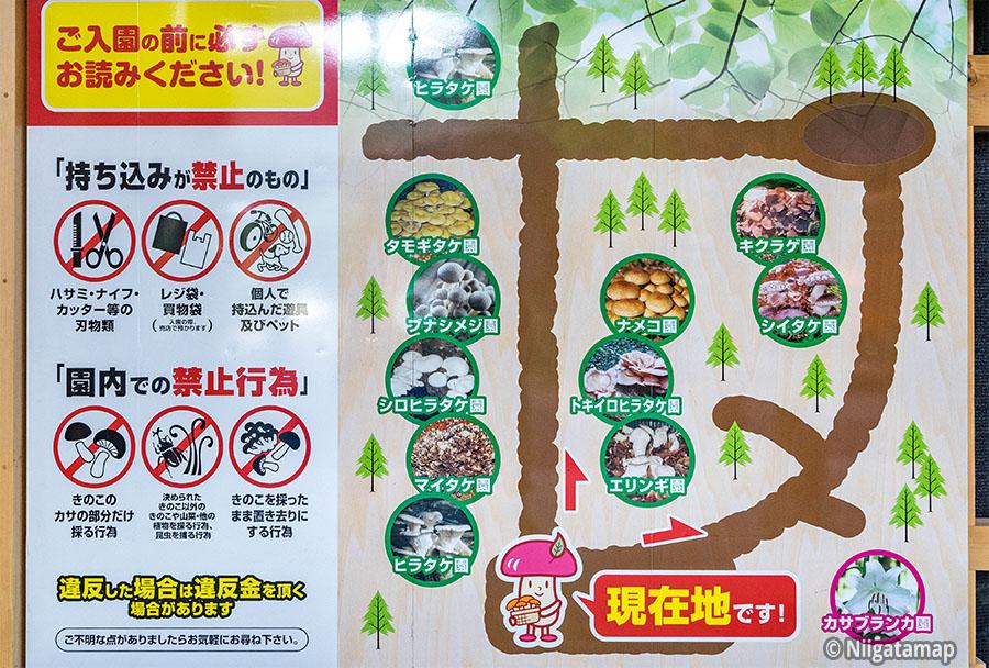 キノコ園案内図