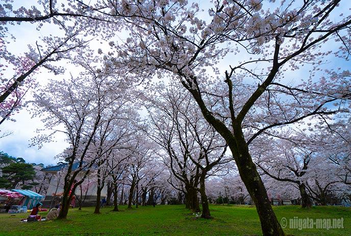 村松公園と桜