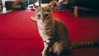 新潟市江南区亀田のレトロな猫カフェ猫鳴館