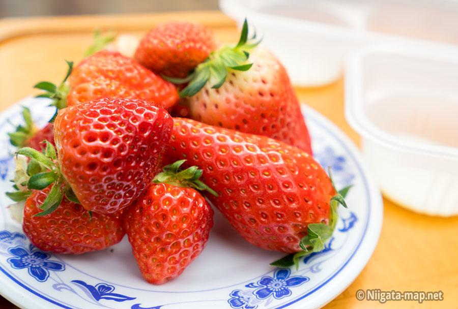 イチゴの食べ比べ