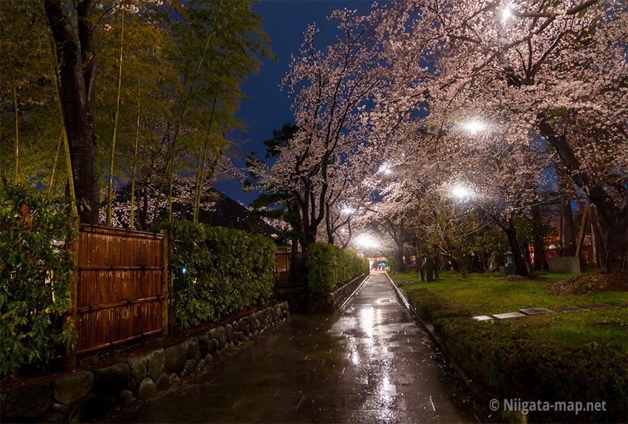 高田公園内の歩道