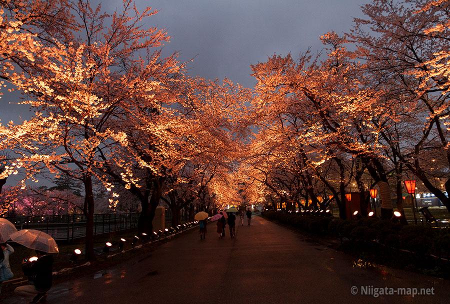 高田公園桜ロード
