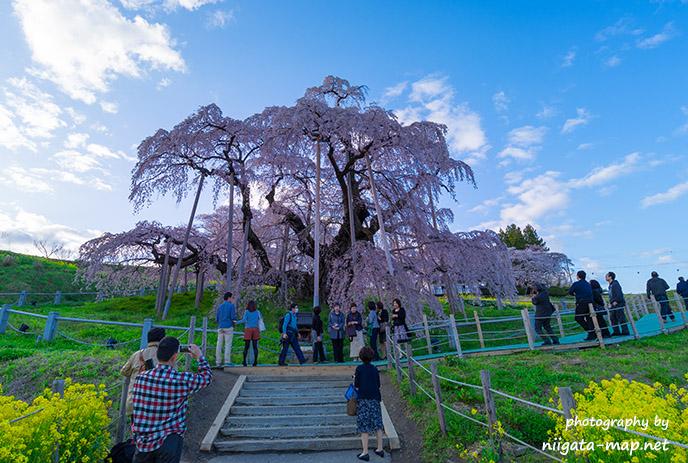 【福島県】三春滝桜