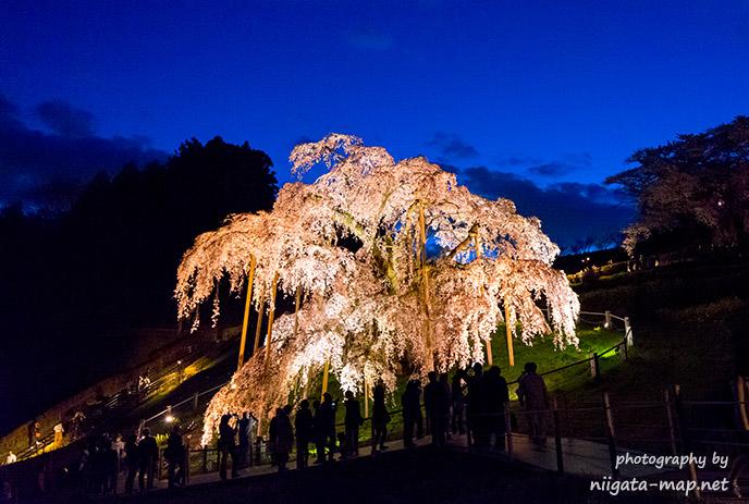 滝桜ライトアップ