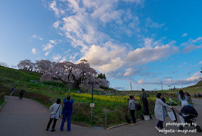 福島三春滝桜