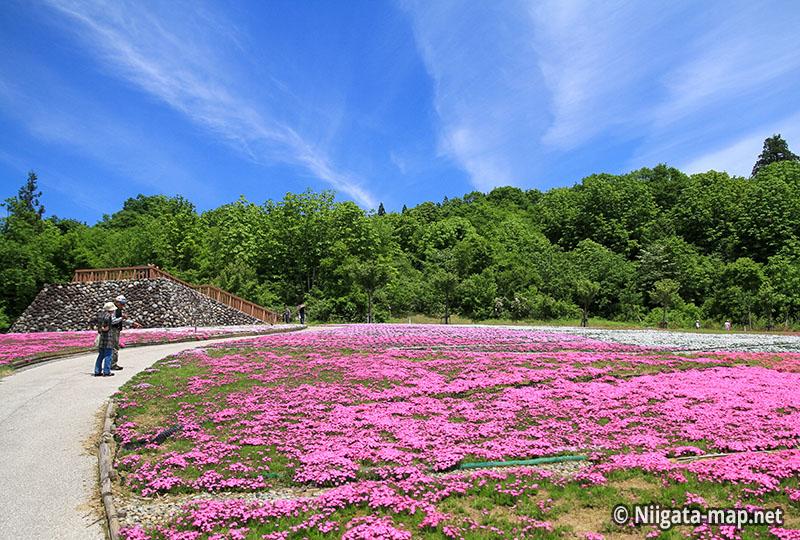 魚沼芝桜まつり展望デッキ
