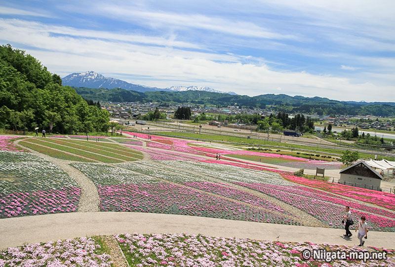 芝桜公園全体
