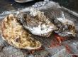 【期間限定】牡蠣小屋が新潟万代シテイにやってきた!【東北復興支援イベント】