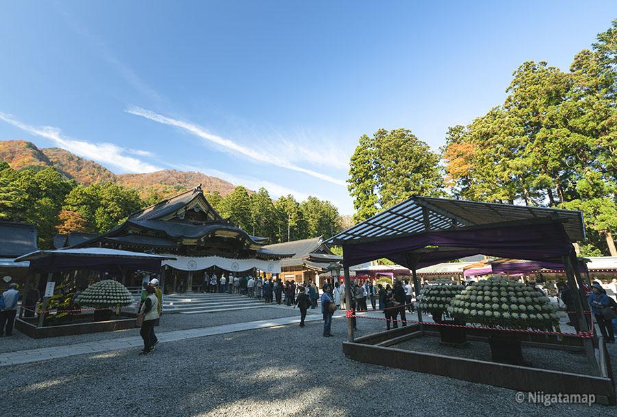 彌彦神社本殿と菊花展覧会