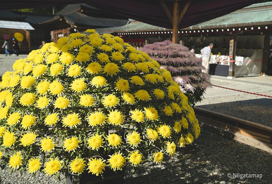 菊の受賞作品