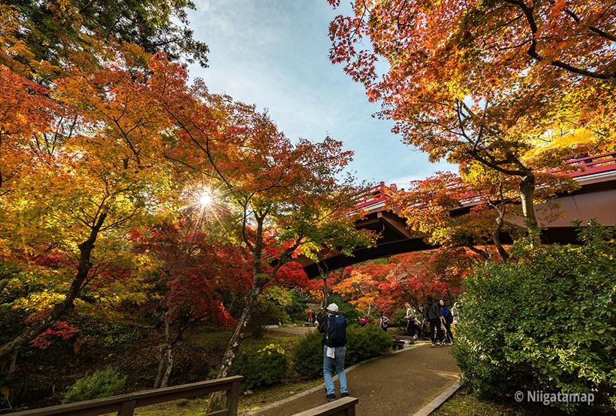 彌彦公園紅葉谷の観月橋